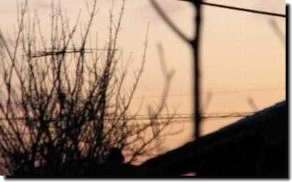 ベランダから見た朝焼け うーん、いまいちな写真^^;